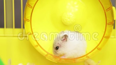 Hamsteri x videot