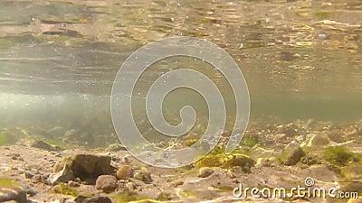 Video subacqueo della corrente d'acqua dolce stock footage