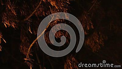 Vieil arbre sec chancelant mystérieusement sous le vent, l'ouragan de prévision et la pluie clips vidéos