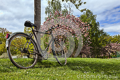 Vieille bicyclette en parc au printemps
