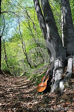 Vieille guitare dans une forêt