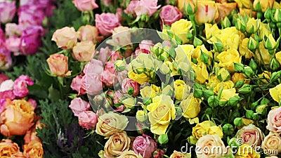 Viele exotischen Blumen vereinbarten in einer einzelnen Zeile stock footage