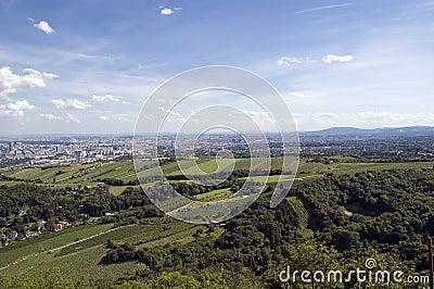 Vienna vineyards View