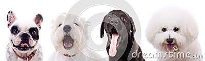 Vier überraschte Welpenhunde