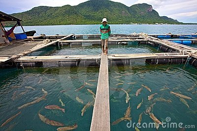 Vietnam Fish Farmer Editorial Photo
