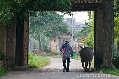 Vietnamese Farmer with Water Buffalo Editorial Stock Photo