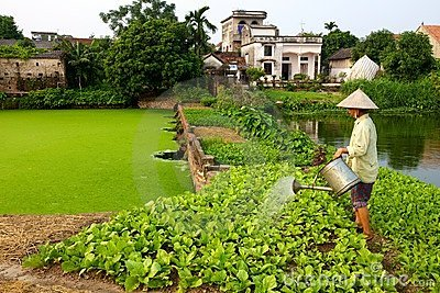 Vietnamese Farmer watering Crop Editorial Photo