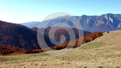 View of beautiful mountain peaks rising above the colored forest stock footage