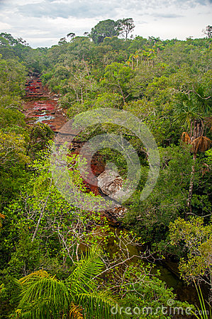 View of Cano Cristales in Colombia