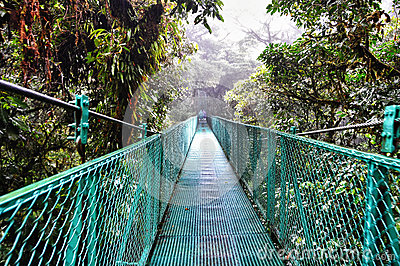 View of the cloud forest canopy