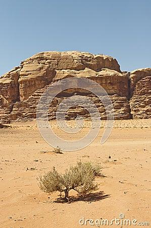 View of the desert in the Wadi Rum