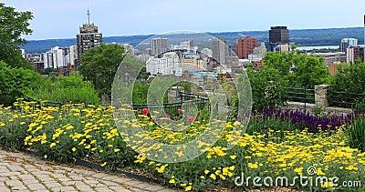 View of Hamilton, Canada, skyline with flowers in front 4K. A View of Hamilton, Canada, skyline with flowers in front 4K stock footage