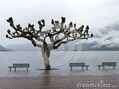 View of lake Maggiore in Ascona