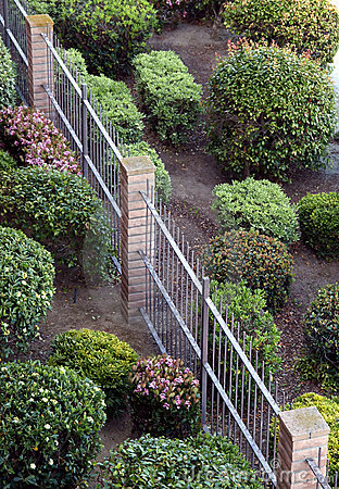 View of manicured bushes and fence
