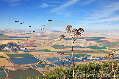View from Mount Gilboa