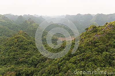 View Over Green Forest Royalty Free Stock Photography - Image: 26676657
