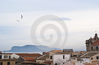 View of Palermo with roofs and seagulls
