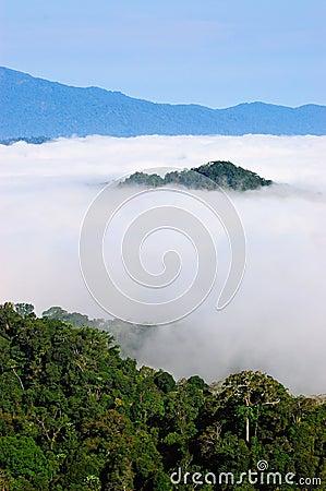 View point wetlands sea fog.
