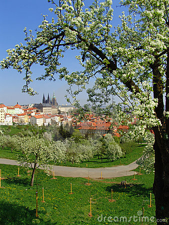 View on Prague gothic Castle with flowering trees