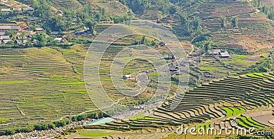 View of rice crops in Vietnam