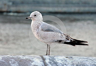 View of the seagull