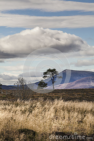 View to Ben Rinnes in Scotland