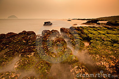 View of tropical rocky beach with green seaweed