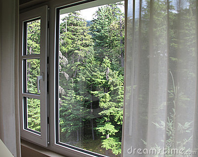 View through window to evergreen trees