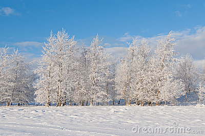 View on the winter trees