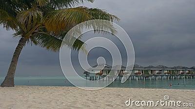 Villa's op een tropisch eiland met palmen en een wit zandig strand maldives stock videobeelden