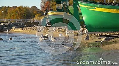 Village de port de pêche à Gdynia à la côte de mer baltique banque de vidéos
