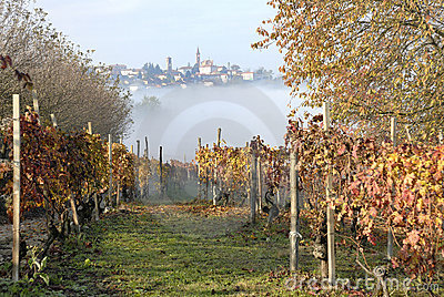 Village and Grapevines
