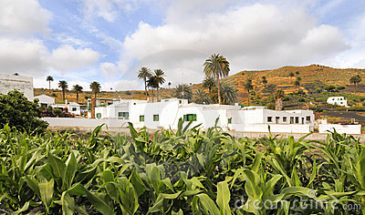 Village of Haria, Lanzarote, Canary Islands, Spain