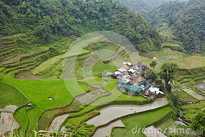 Village and rice
