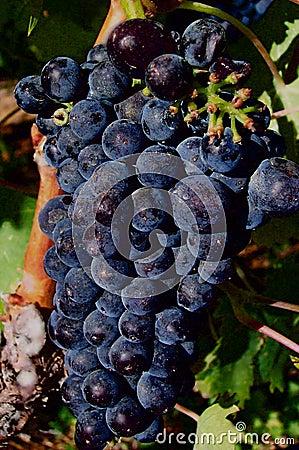 Vin rouge rouge