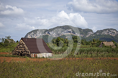 Vinales Nationalpark Stockfoto - Bild: 24367880