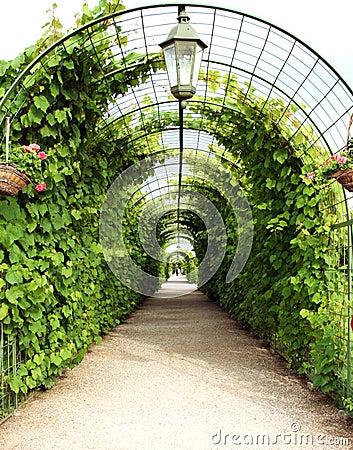 Vine arbor tunnel