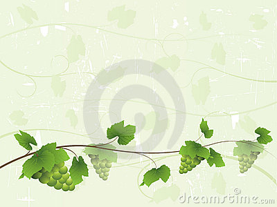 Vine background with green grapes