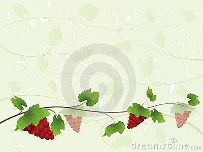 Vine background with red grapes