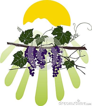 Vine color