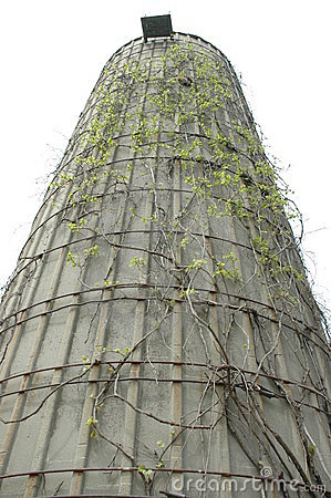 Vine Covered Silo