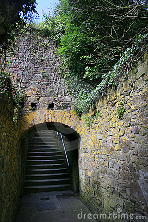Vine covered staircase Ireland