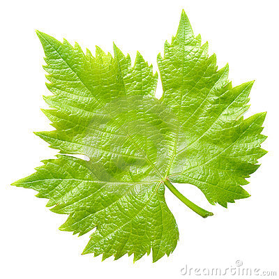 Free Vine Leaf. Stock Photography - 19738272