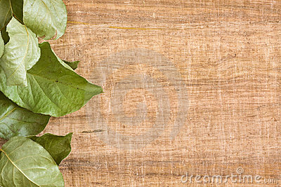 Vine leaf background