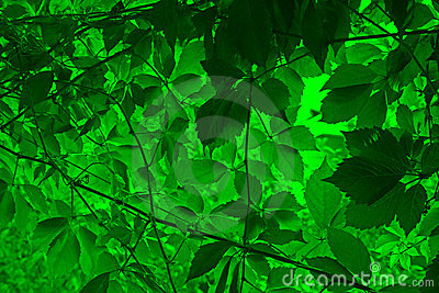 Vine leaves background