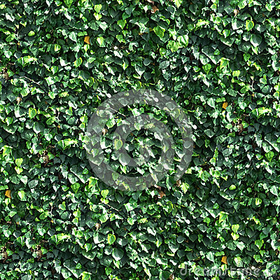 Vine and Leaves on a Wall Seamless Tile