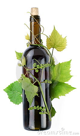 Vine surrounds a bottle of wine