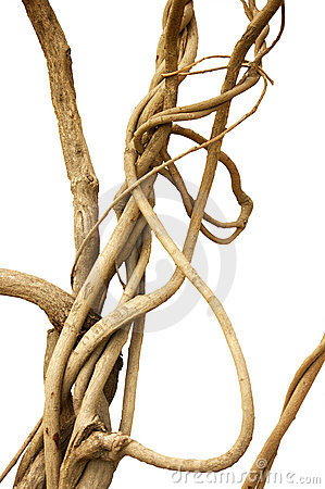 Free Vine Wire Royalty Free Stock Image - 19293316