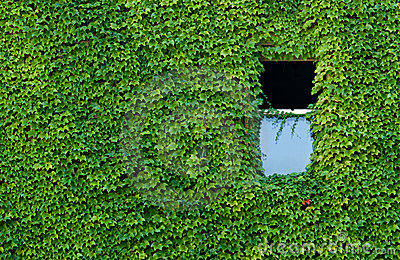Vined Wall with Window