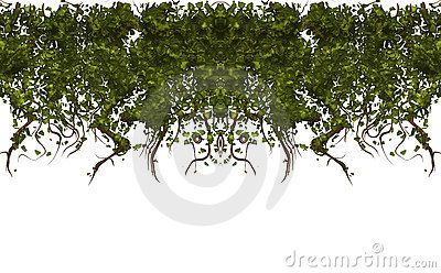 Vines isolated white texture